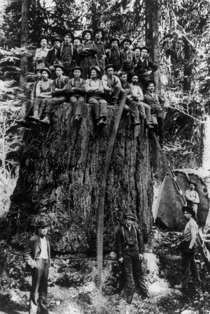 lumberjacks_on_a_stump