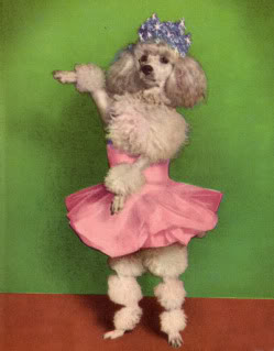 dancing poodle