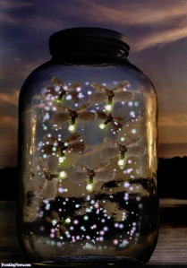 Fireflies-in-a-Jar-59432