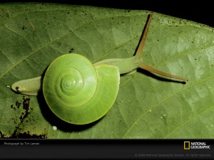 green-snail-laman-400957-sw