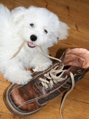 problems-pup-boot
